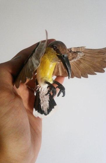 female-purple-sunbird1