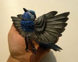 Splendid-fairy-wren-5
