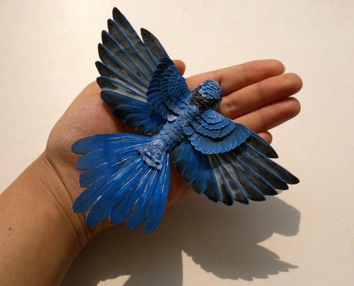 Splendid-fairy-wren-7